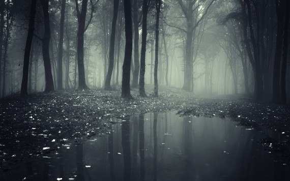 Проклятый лес скачать торрент