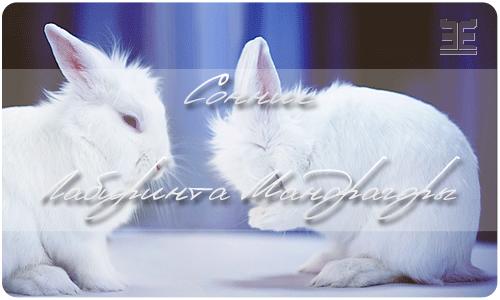 Вот толкование, которые дает этот сонник: заяц кролик так же могут сниться в качестве символов супружеской верности, любви и страсти царящей в отношениях.