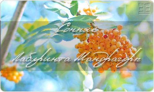 Рябина обыкновенная — Sorbus aucuparia L.